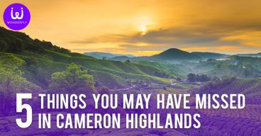 5 Things you may have missed in Cameron Highlands
