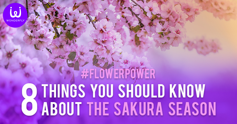 #FlowerPower 8 things you should know about the Sakura season