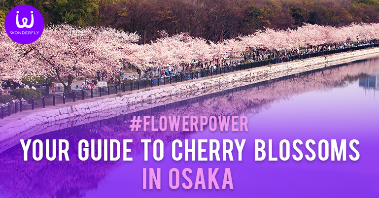 FlowerPower Your guide to Cherry Blossoms in Osaka