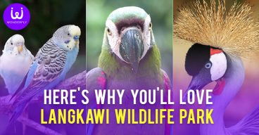 ere's why you'll love Langkawi Wildlife Park