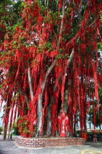 The Wishing Tree draped in red