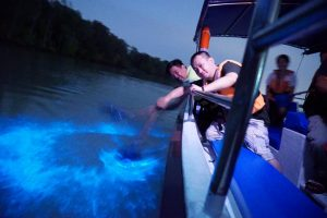 A trail of blue lights up when a man disturbs the water with bioluminescent microorganisms