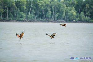 Eagles swoop down to the river to feed