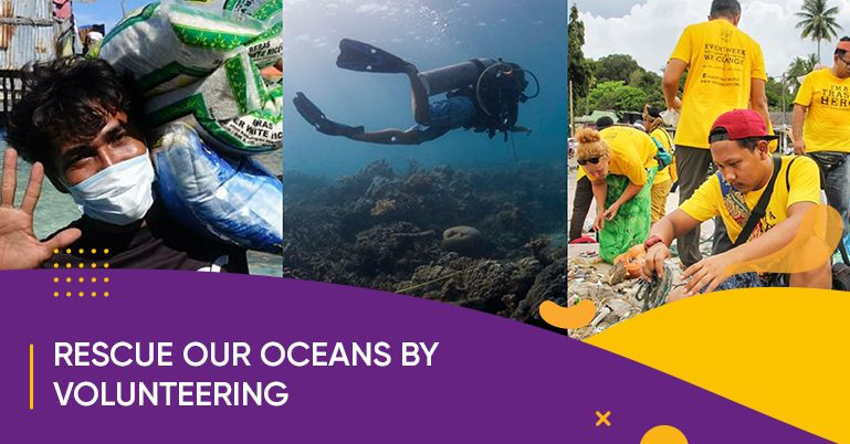Rescue our oceans by volunteering at these 6 places