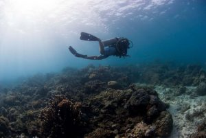 A diver carrying our his duties for Reef Check Malaysia