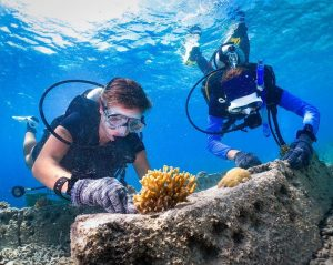 Volunteers for TRACC repairing a coral