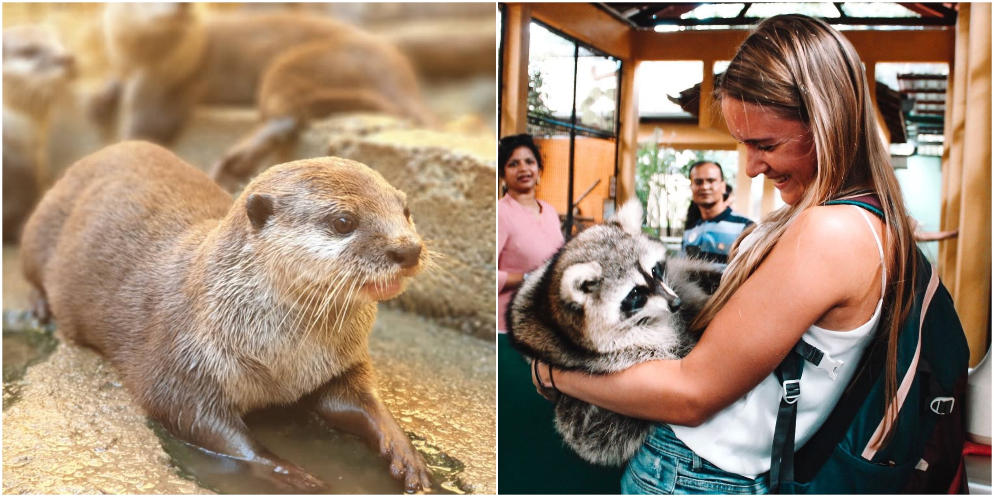 There's no shortage of cuddles in Langkawi WildLife Park!