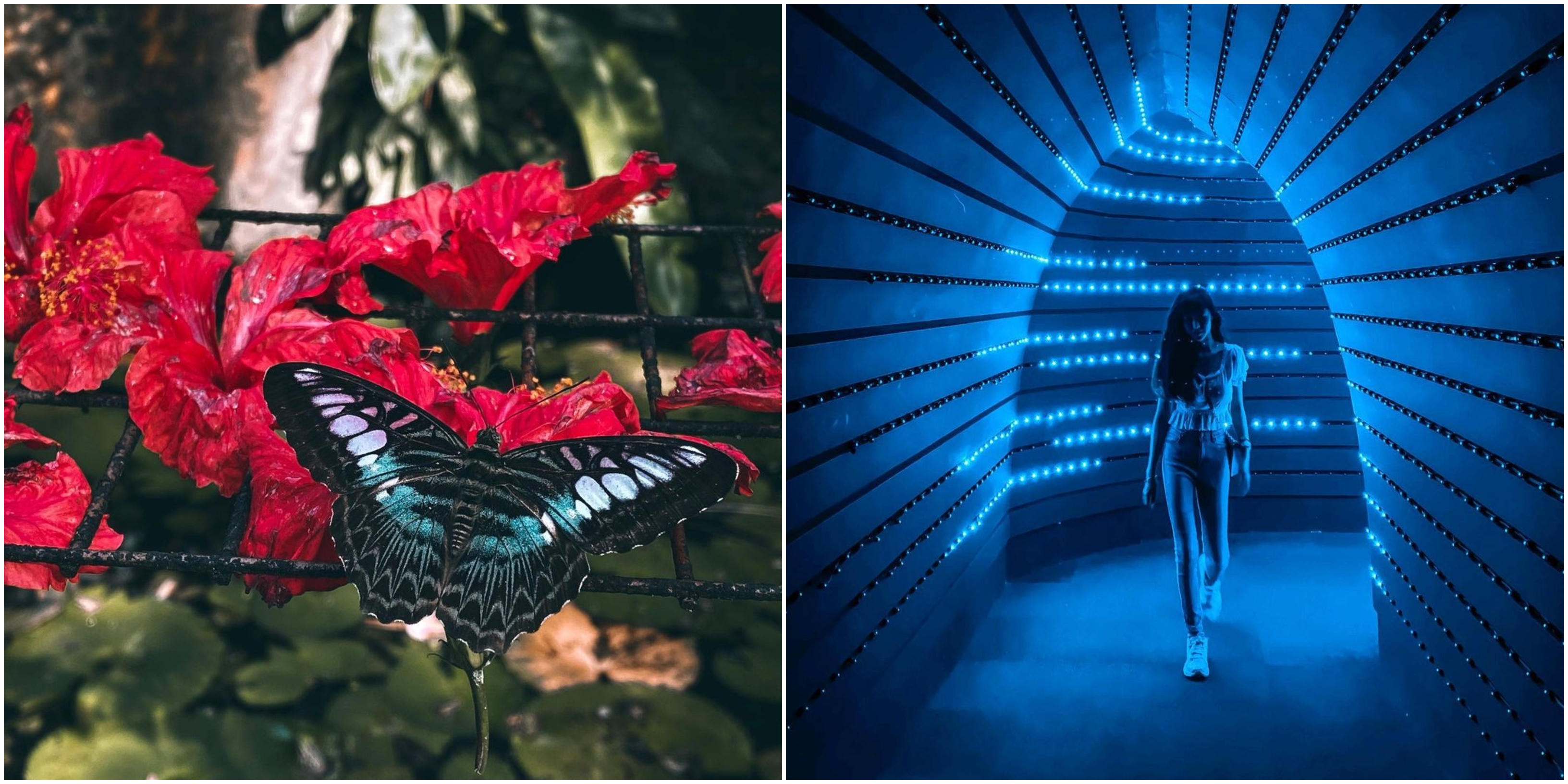 This butterfly garden in Penang is straight out of a magical fantasy movie